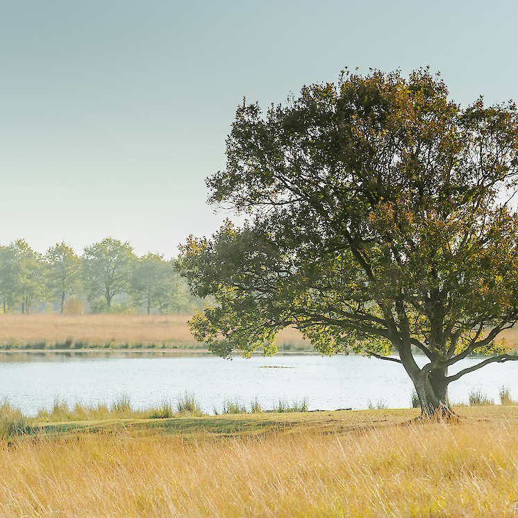 Foto The lone tree van Patrick snijder