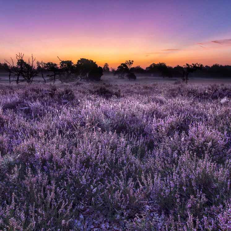 Foto Purple morning van tom-hengst